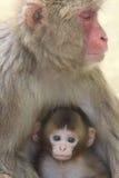 Scimmia due del Giappone Fotografie Stock