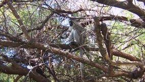 Scimmia e bambino stock footage