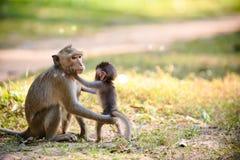 Scimmia e bambino Fotografia Stock