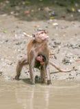 Scimmia e bambino Fotografie Stock Libere da Diritti
