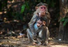 Scimmia e bambino fotografie stock
