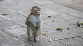 Scimmia e bambino, scimmia Fotografia Stock Libera da Diritti