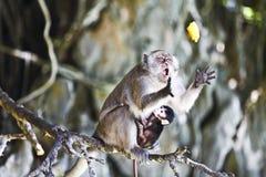 Scimmia e banana Fotografia Stock Libera da Diritti