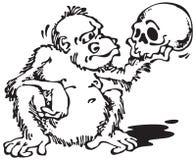 Scimmia e Skull_Black Fotografie Stock