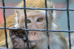 Scimmia esotica Fotografie Stock Libere da Diritti