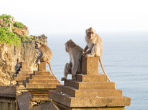 Scimmia (fascicularis del Macaca) Fotografia Stock
