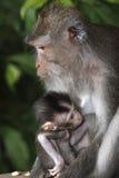 Scimmia femminile con l'infante Immagini Stock
