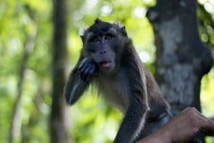 Scimmia in Forest Eco Park Fotografia Stock