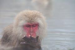 Scimmia giapponese della neve Immagine Stock
