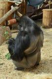 Scimmia Isolato su bianco Immagine Stock