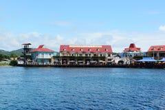 Scimmia LaLa Zip Hotel In Honduras fotografia stock