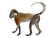 Scimmia (marmoset) Immagine Stock Libera da Diritti