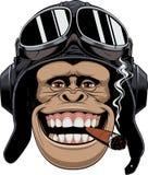 Scimmia nel pilota del casco Immagini Stock