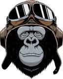 Scimmia nel pilota del casco Immagini Stock Libere da Diritti