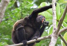 Scimmia nella giungla 1 Fotografia Stock Libera da Diritti