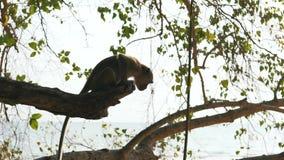 Scimmia nella natura selvaggia video d archivio