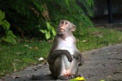 Scimmia nello zoo immagine stock libera da diritti