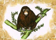 Scimmia piena Fotografie Stock