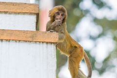 Scimmia premurosa del bambino Fotografie Stock Libere da Diritti