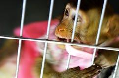 Scimmia selvaggia bloccata in una gabbia Immagini Stock Libere da Diritti