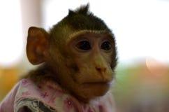 Scimmia selvaggia bloccata in una gabbia Immagine Stock