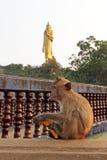 Scimmia selvaggia con la banana Fotografia Stock Libera da Diritti