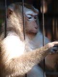 Scimmia sola Immagine Stock Libera da Diritti