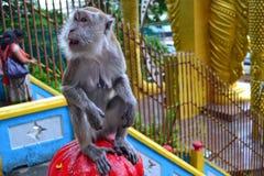 Scimmia sorpresa Fotografia Stock