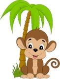 Scimmia sotto il palmtree Immagini Stock Libere da Diritti
