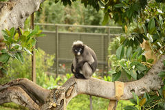 Scimmia su un albero Immagine Stock