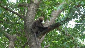 Scimmia su un albero nella giungla archivi video