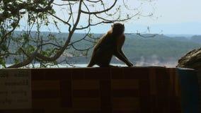 Scimmia sul bordo del recinto stock footage