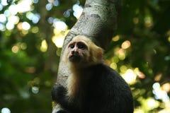 Scimmia sull'albero fotografie stock