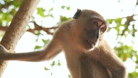 Scimmia sulla fine dell'albero su video d archivio