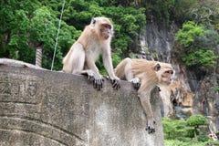 Scimmia sulla parete Fotografie Stock Libere da Diritti