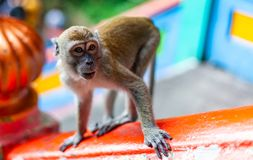 Scimmia sulla scala immagini stock
