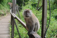 Scimmia sulla spiaggia Immagine Stock Libera da Diritti