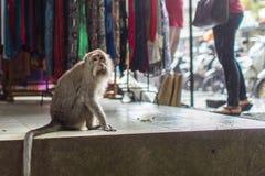 Scimmia sulla via nel centro di Ubud Fotografia Stock
