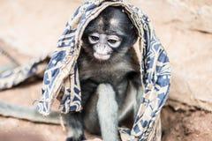 Scimmia sveglia Fotografie Stock