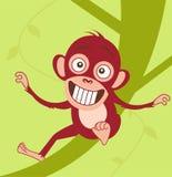 Scimmia sveglia del bambino che si siede su un albero Fotografia Stock