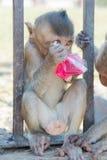 Scimmia Tailandia Fotografia Stock