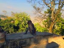 Scimmia Tempio delle scimmie nel Nepal Fotografia Stock Libera da Diritti