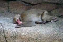 Scimmia triste immagini stock