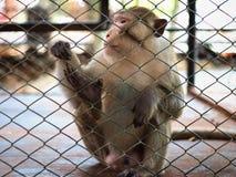 Scimmia triste in prigione Fotografia Stock Libera da Diritti