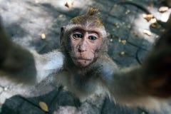 Scimmia in Ubud, Bali Fotografia Stock