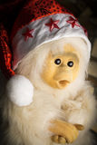 Scimmia in un cappuccio di Natale Fotografia Stock