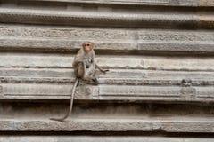 Scimmia in un tempio Fotografie Stock