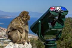 Scimmia vicino al telescopio Fotografia Stock Libera da Diritti