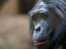 Scimmia in zoo fotografia stock