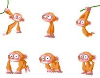 Scimmie Fotografia Stock Libera da Diritti